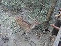 Sundarbon MONGLA 04.jpg