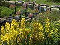 Surrended in between colors.- Cernés par les coloris floraux. - panoramio.jpg