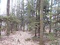 Svydivok, Cherkas'ka oblast, Ukraine - panoramio (47).jpg