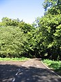 Swan Wood, Stock, Essex - geograph.org.uk - 59059.jpg