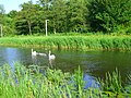 Swans with offspring.JPG