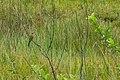 Swaziland (33532179171).jpg