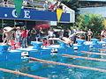 Swimmers diving off starting blocks doing Free Colchian 3.jpg