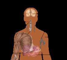 hiv and bladder