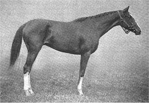 Tanya (horse) - Image: Tanya (horse)
