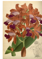 The Orchid Album-01-0050-0016.png