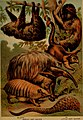 The animal kingdom; based upon the writings of the eminent naturalists, Audubon, Wallace, Brehm, Wood and others (1897) (18198234871).jpg
