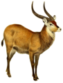 The book of antelopes (1894) Cobus defassa white background.png