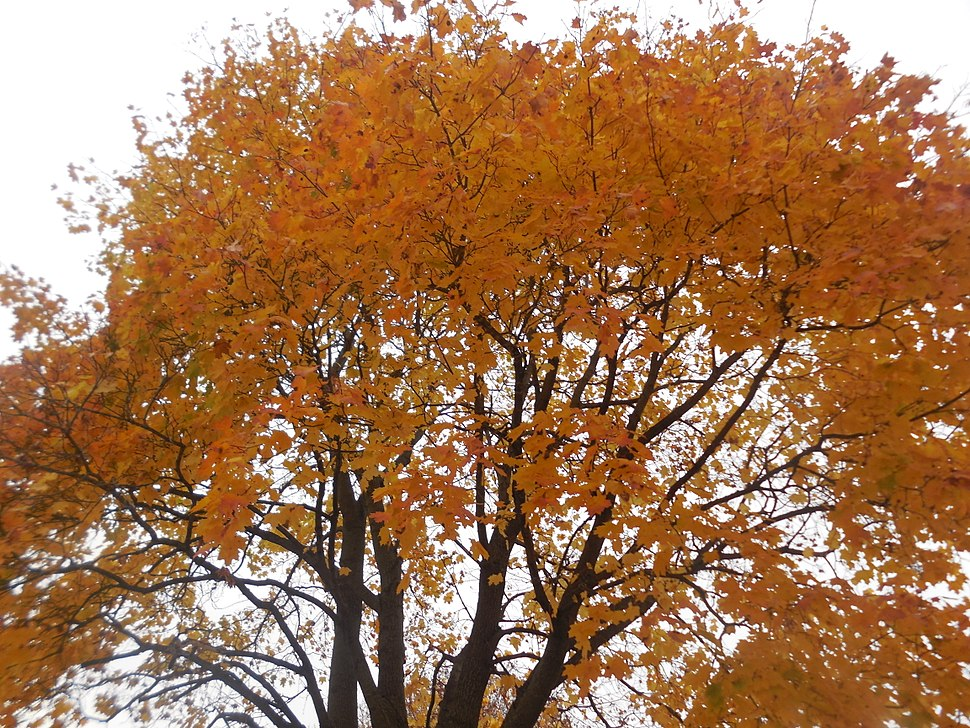 This is a fall tree