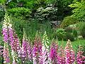 Thorpe Park garden.jpg