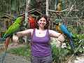 Three macaws -Macaw Mountain Bird Park, Honduras-8e.jpg