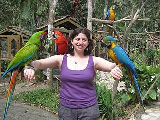 Ary patria medzi najvzácnešie chované papagáje