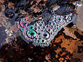 Tide Pools bubbles 3.jpg
