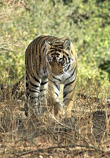 Ranthambhore National Park Travel Guide At Wikivoyage