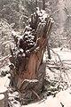 Tree (134511023).jpeg