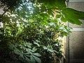 Tree And A Big Flower 00 - panoramio.jpg