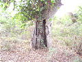 Tree hollow (1).JPG