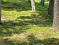 Tree trunks by Great Sacandaga Lake (2008).jpg