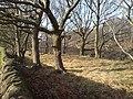 Trees above the railway cutting, Newlay - geograph.org.uk - 787745.jpg