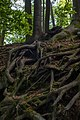 Trees and tangled roots.jpg
