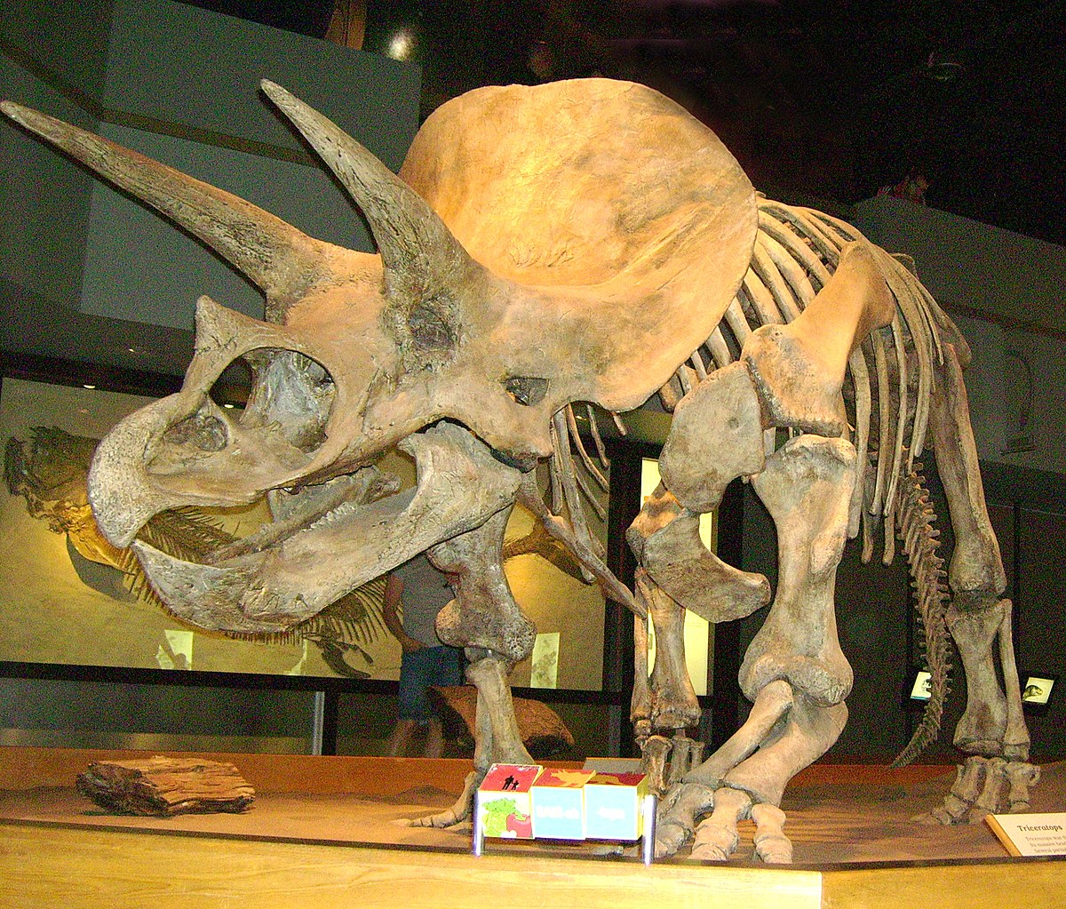 Dinosaur Toys for kids,6 PCs Large Plastic Realistic ... |Triceratops Dinosaur
