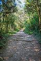 Trilha da Cachoeira - Horto Florestal.jpg