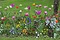 Tulipes en fleur au Jardin Massey de Tarbes 05.jpg