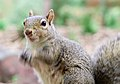 Turbo squirrel action (2896835661).jpg