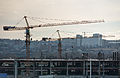 Two Cranes in Russia.jpg