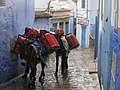 Two donkeys carrying gas tanks up the narrow, blue streets of Chefchaouen, Morocco.jpg