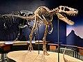 Tyrannosaurus Rex Jane.jpg