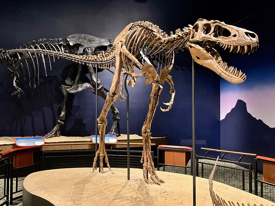 Tyrannosaurus - The Reader Wiki, Reader View of Wikipedia