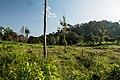 USAID Measuring Impact Conservation Enterprise Retrospective (Philippines; Nagkakaisang Tribu ng Palawan) (38483342010).jpg