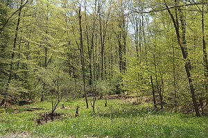 Gaskill Township, Jefferson County, Pennsylvania - Wooded scene along Winslow Road