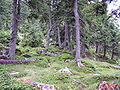 Ukraine-Carpathian Mountains-Chornohora Range-31.jpg