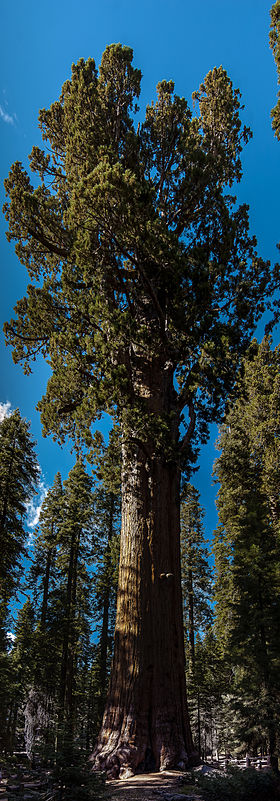 Image illustrative de l'article Parc national de Sequoia