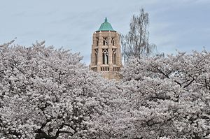 University of Washington Quad cherry blossoms 2014 - 04 (13347581233).jpg