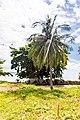 Unnamed Road, Tambon Ko Libong, Amphoe Kantang, Chang Wat Trang 92110, Thailand - panoramio (48).jpg