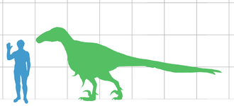 Utahraptor - Size of the largest known individual of Utahraptor, compared with a human