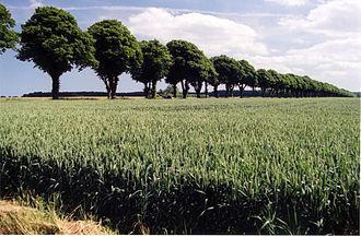 Vallø - Rural area in Vallø municipality