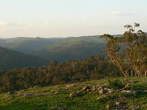 W Tree, Victoria - North-western view from the top of Mount Murrindal