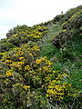 Vegetation on Kipling Tors - geograph.org.uk - 1302657.jpg
