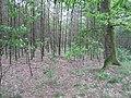 Verdwenen vloeivelden (31253164555).jpg