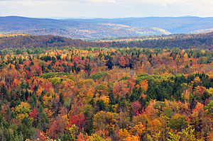 Humid continental climate - Mixed forest in Vermont during autumn