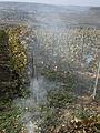 Vignes (Coteaux de Festigny.51) Cl.J.Weber05 (23049515144).jpg