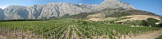 Croatian wine - Vineyard in the Makarska region on the slopes of Biokovo