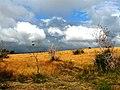 Vue sur la savane - panoramio.jpg