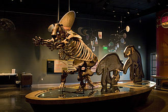 Western Science Center - Harlan's ground sloth at WSC
