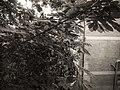Warm Gray Hue I - panoramio.jpg