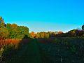 Warner Park - panoramio (64).jpg